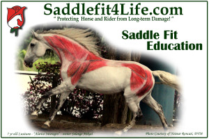 S4L -White Horse Poster for ISF - 100dpi[2]
